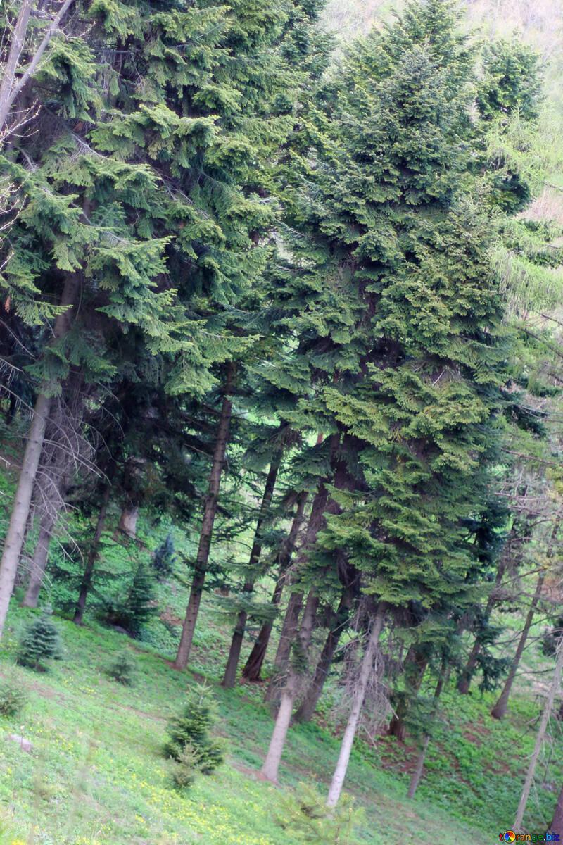 Spring slope №39876