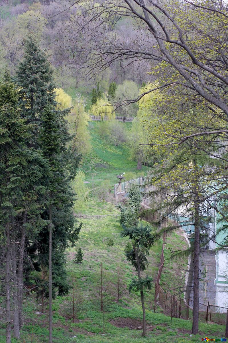 All`inizio della primavera nel Parco della città №39878