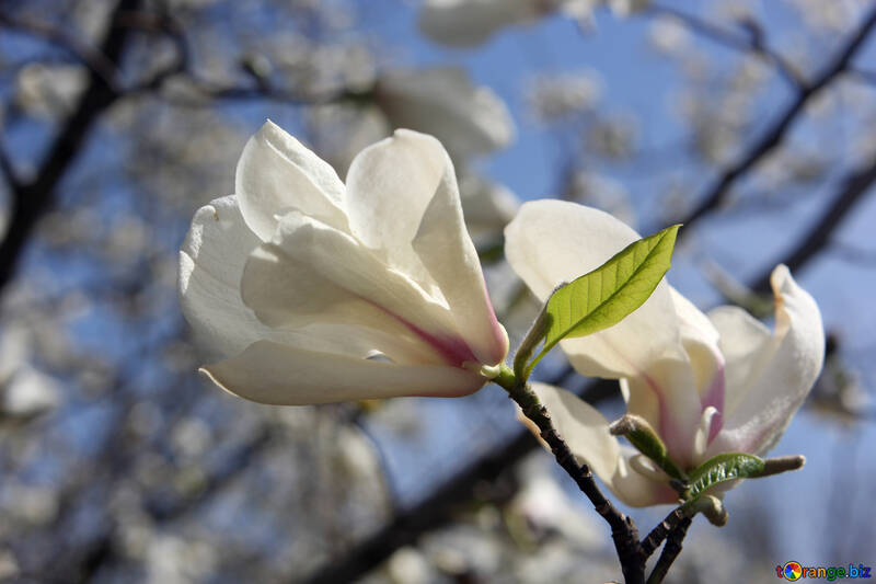 Flor de primavera №39714