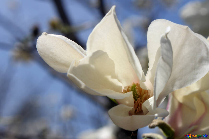 White beauty №39718