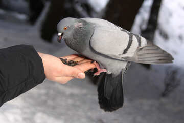 Dove in hand №4175
