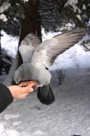 Птица ест с руки №4174