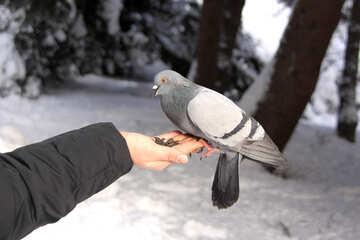 Hand dove №4176