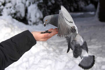 The bird is not afraid of man №4179