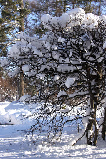Snow on the branches of shrubs №4171