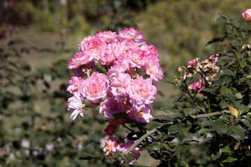 Blume Hüften №4225