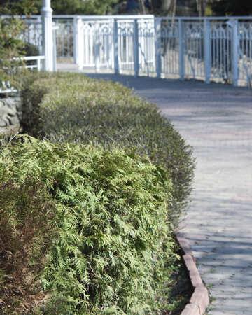 Zaun der Tanne №4583