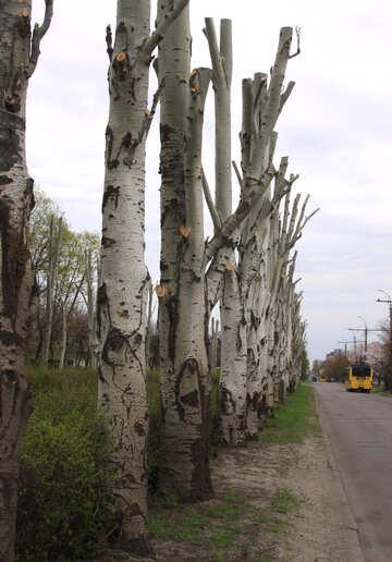 Einige Bäume №4940