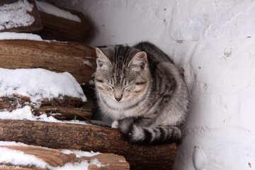 Kitten freezes in winter №4001
