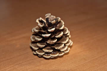 Conifer cone pines