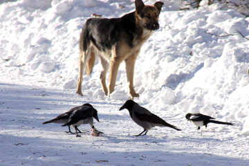 A dog and bird №4270