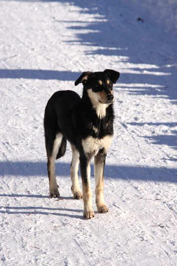 Беспородный пес №4047