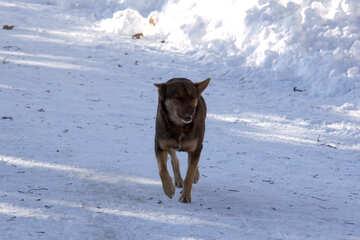 Wandering  dog  winter №4044