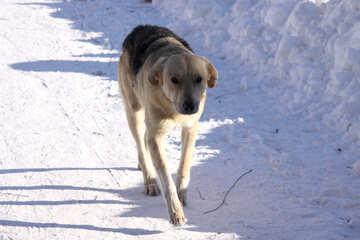 Wild dog №4041