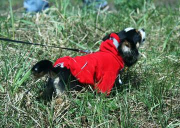 Spiteful dog №4740