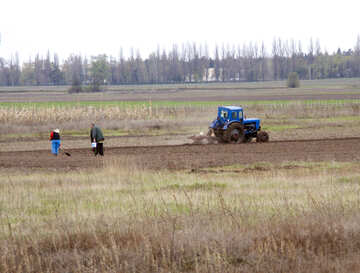 Planting potatoes.People with shovel. Tractor plowing. №4870