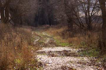 A dirt road in the woods №4021
