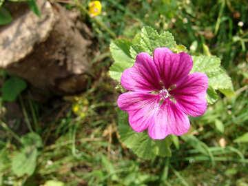 Flower in garden of №4153