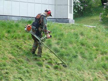 Man cuts lawn trimmer №4123