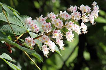 Chestnut horse. Flower. №4060