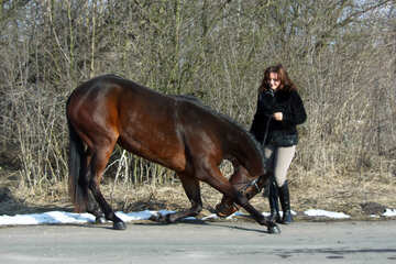 A trained horse. №4690