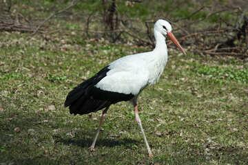 Stork №4576