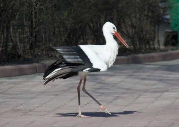 Stork №4578