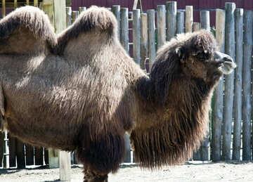 Camel №4676