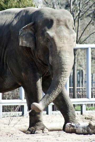 Kiev elephant BOY №4653