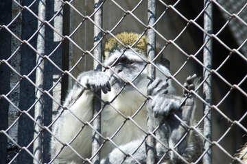 Macaque №4569