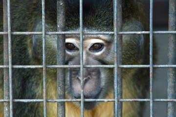 Monkey №4571