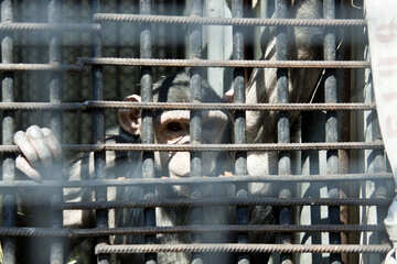 A monkey in cage №4567