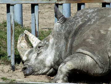Rhino from the Kiev zoo №4629