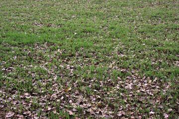 Die Textur der Herbst die grünen Blätter №4035