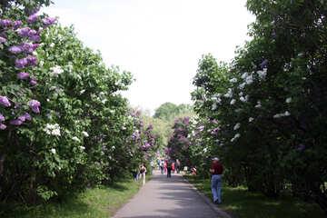 Lilac avenue №4762