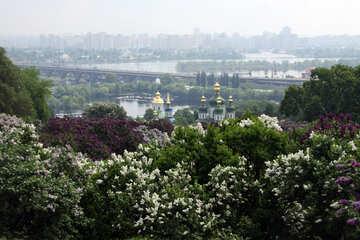 Giardino botanico. I fiori del lillà №4770