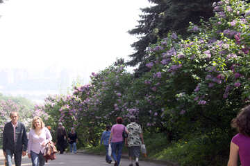 In botanical garden in the spring №4761