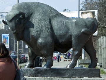 Bufalo scultura №4600
