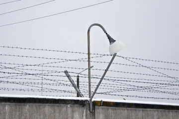 Zone. Prison. №4442