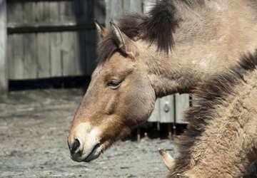 Wild horse №4673