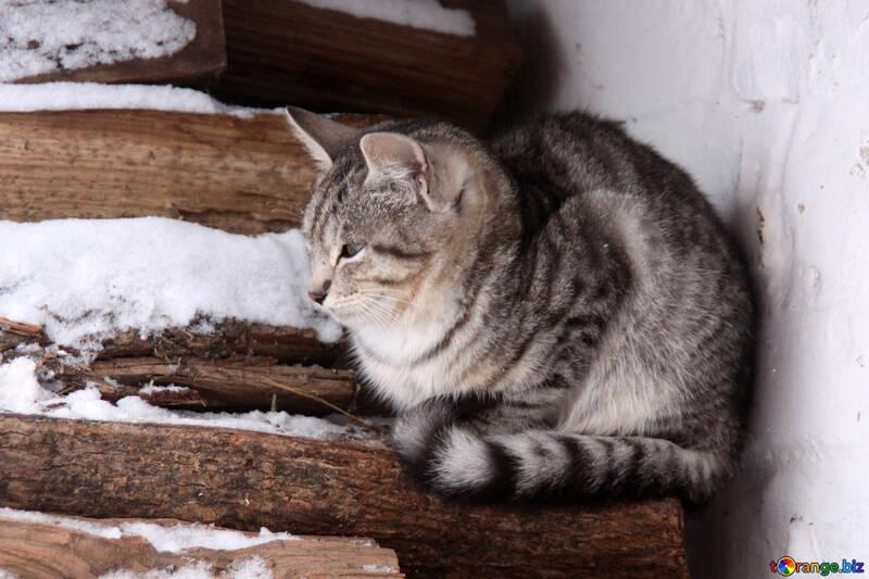 Gray kitten freezes in winter wood №4002