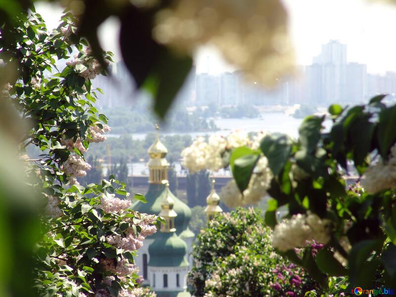 Bóveda Vydubychi monasterio por floración lilas  №4082