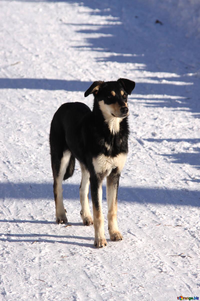 Purebred dog №4047