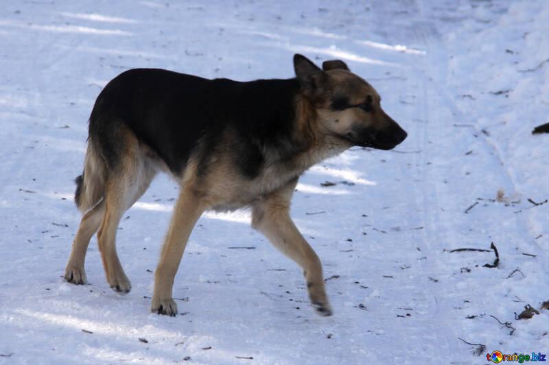 Homeless  dog  and  snow №4051