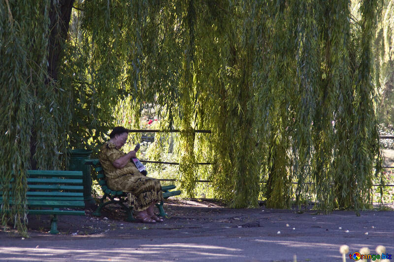 Woman on bench in the park reading newspaper in the shade of willow №4217