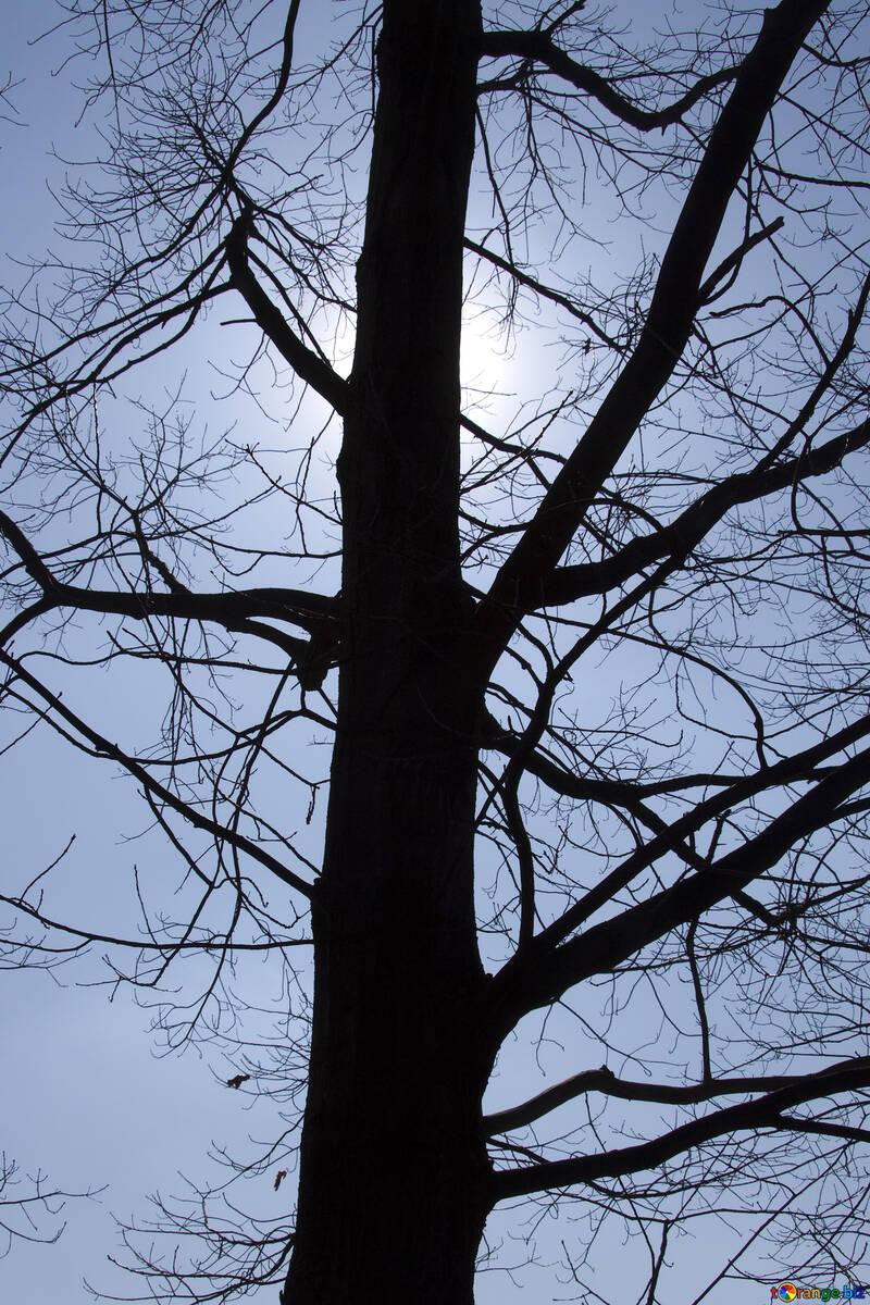 Sun  through  tree  winter №4503