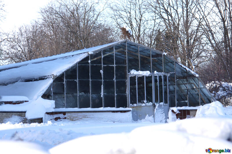 Hothouse greenhouse in the winter №4243