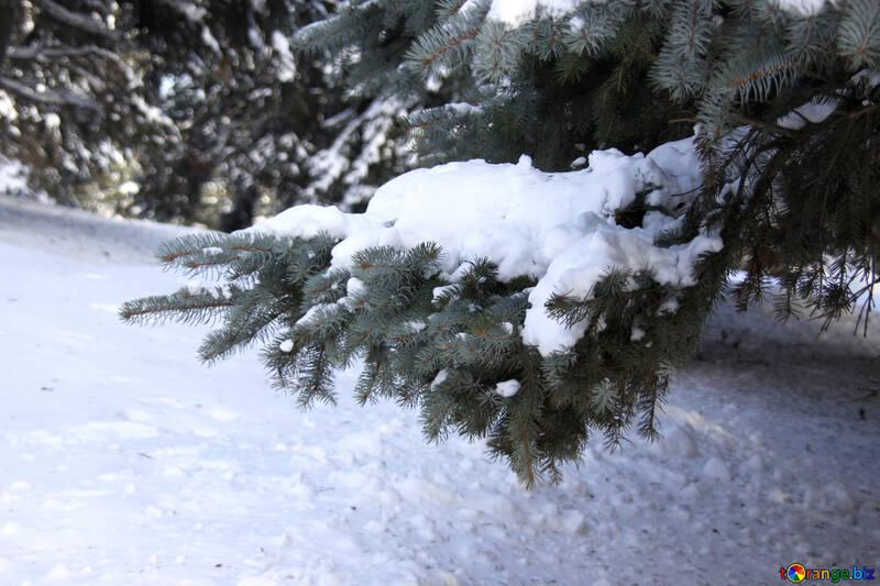 Heavy snow on elkah №4164