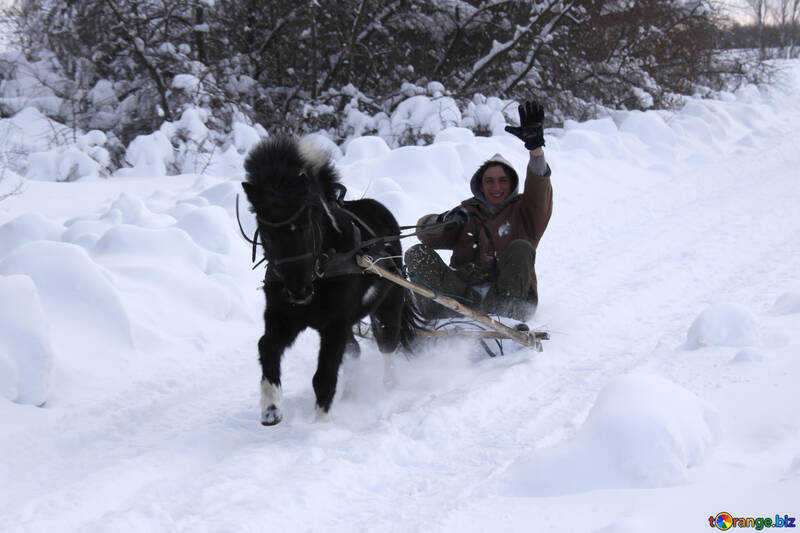 Pony rides in the winter sleigh №4005