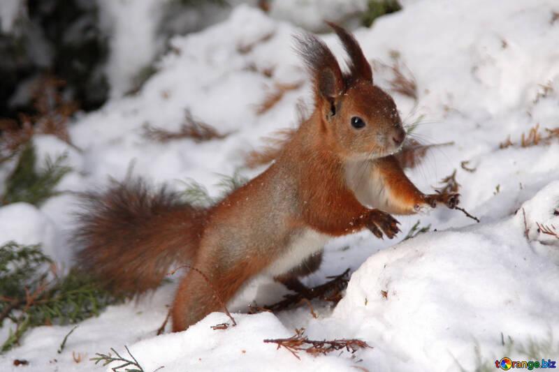 Squirrel №4138